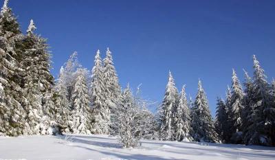 Paysage Vosgien sous la neige