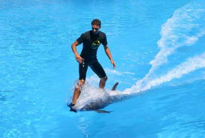 Surf sur un dauphin