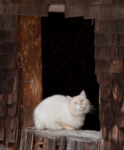 Un chat par la fenêtre