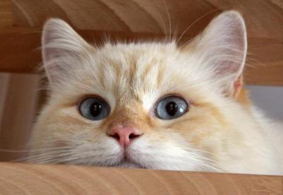Timinoul … mon chat