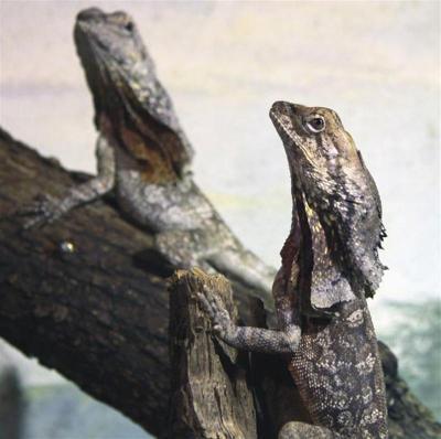 Les reptiles du Zoo d'Amneville